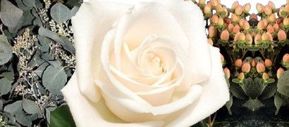 Cream Rose Vendela paired with Seeded Eucalyptus and Peach Hypericum