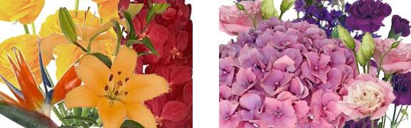 Analogous Color Combinations For Flower Arrangements