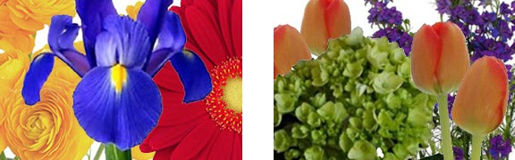 Tradic Color Combinations for Fresh Flower Arrangements