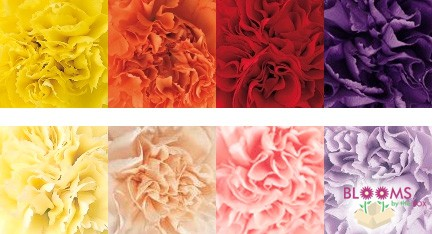 Color Values for Wholesale Flowers