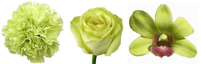 Light Green Roses Punjabi SMS Images Wal...