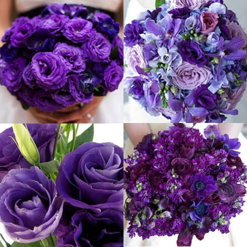 Purple flowers for your wedding color scheme budget friendly beauty both mightylinksfo Choice Image