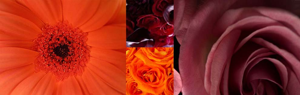 Tangerine and burgundy flowers that match 2012 pantone color of the year
