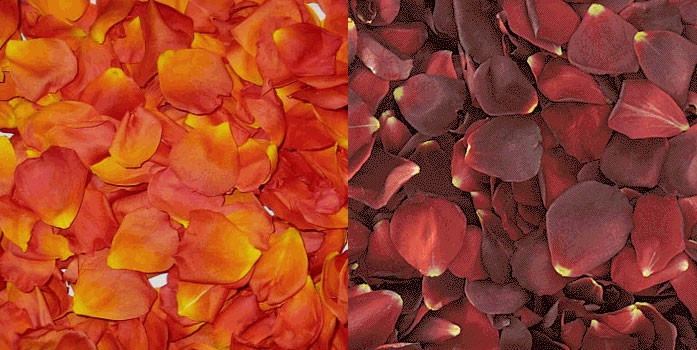 Tangerine and burgundy flower petals from Bloomsbythebox.com