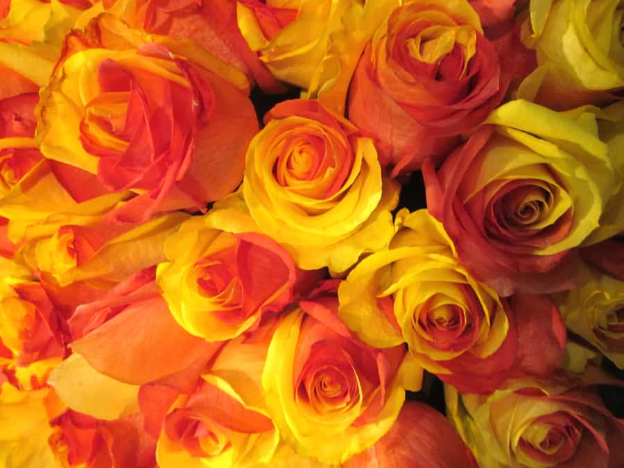 Wedding Flowers Orange And Yellow : Yellow and red dyed flowers wholesale wedding