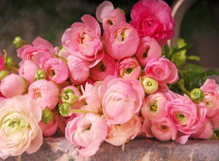 how to care for ranunculus