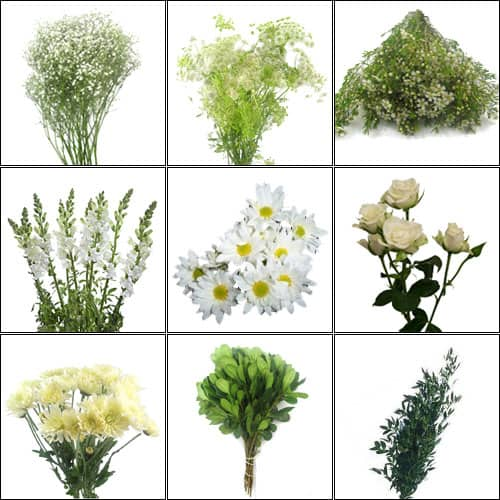 Types of filler flowers for bouquets thin blog for Types of filler flowers