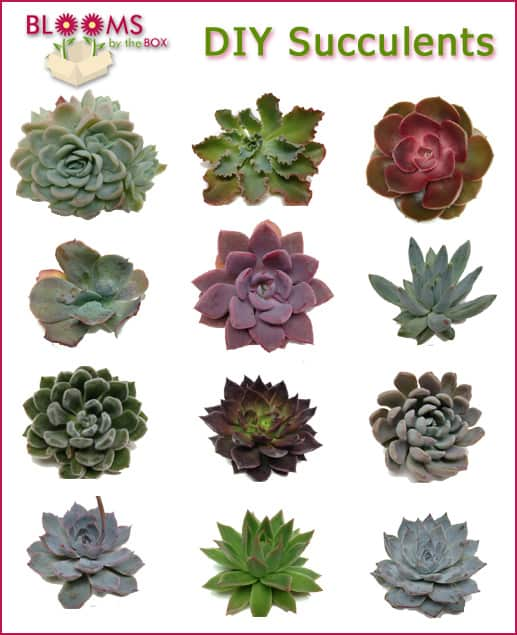 Succulent Sale When You Order Anytime in April!