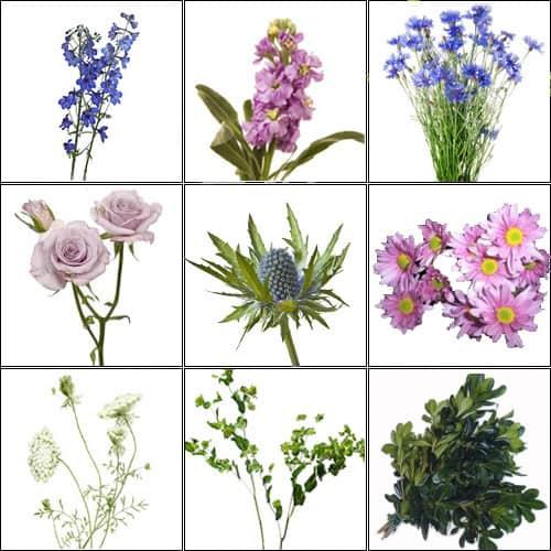 (Purple & Blue) Wildflower Pack copy