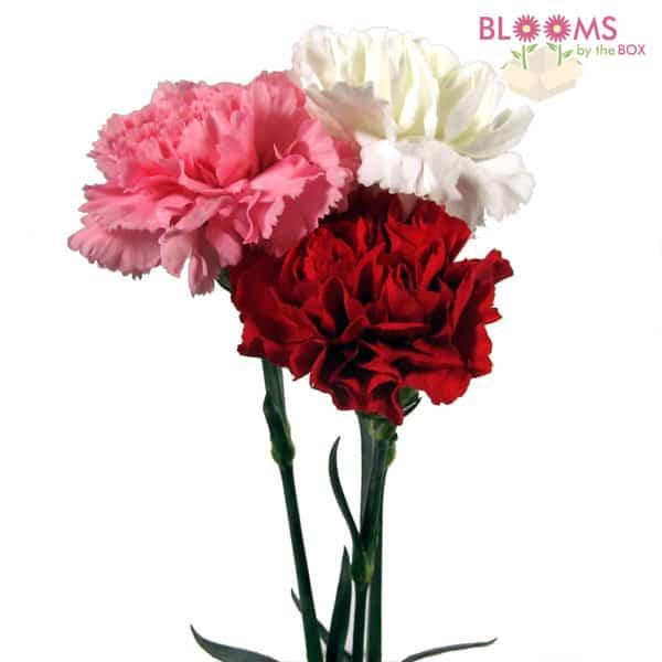 V-Day Carnations