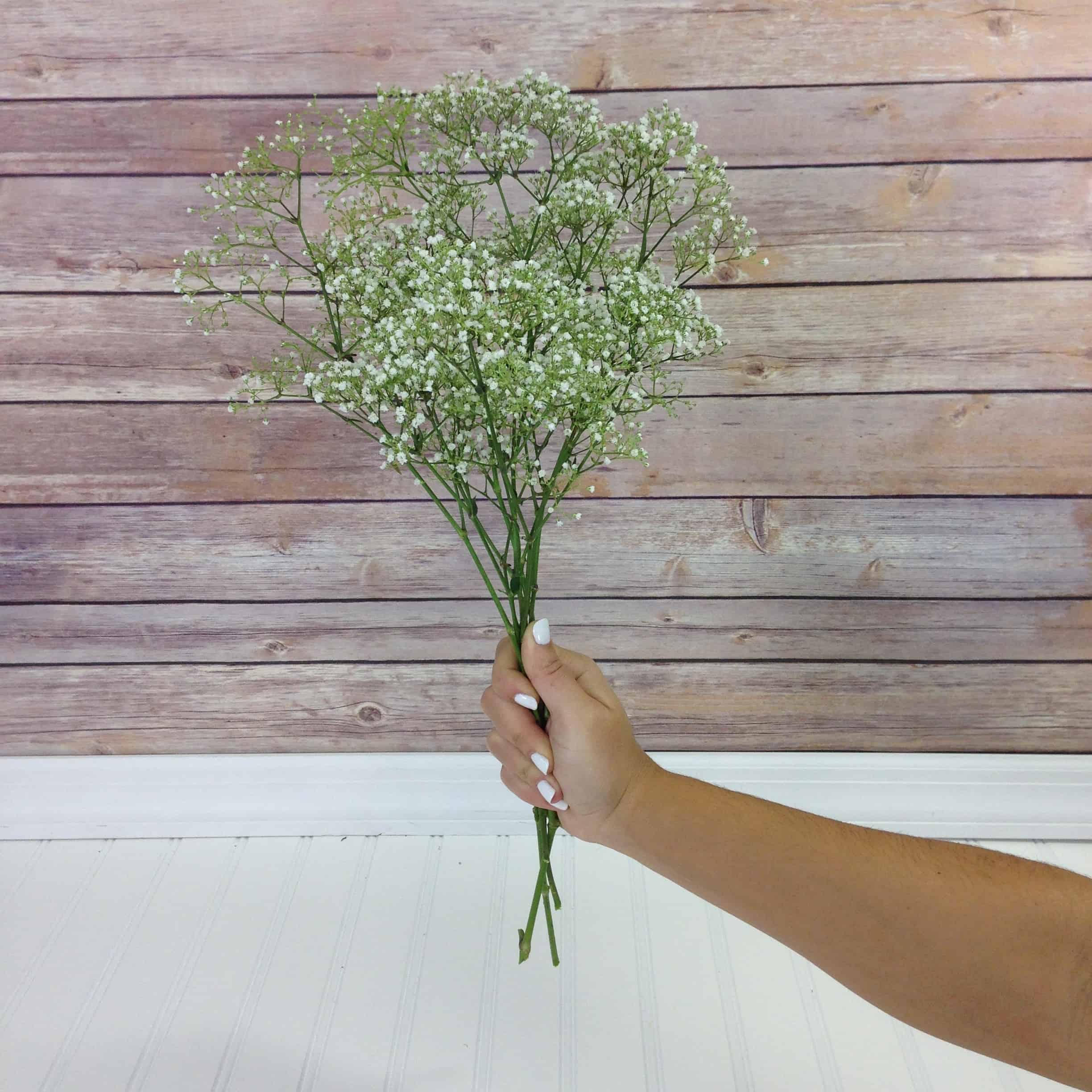 baby's breath bunch