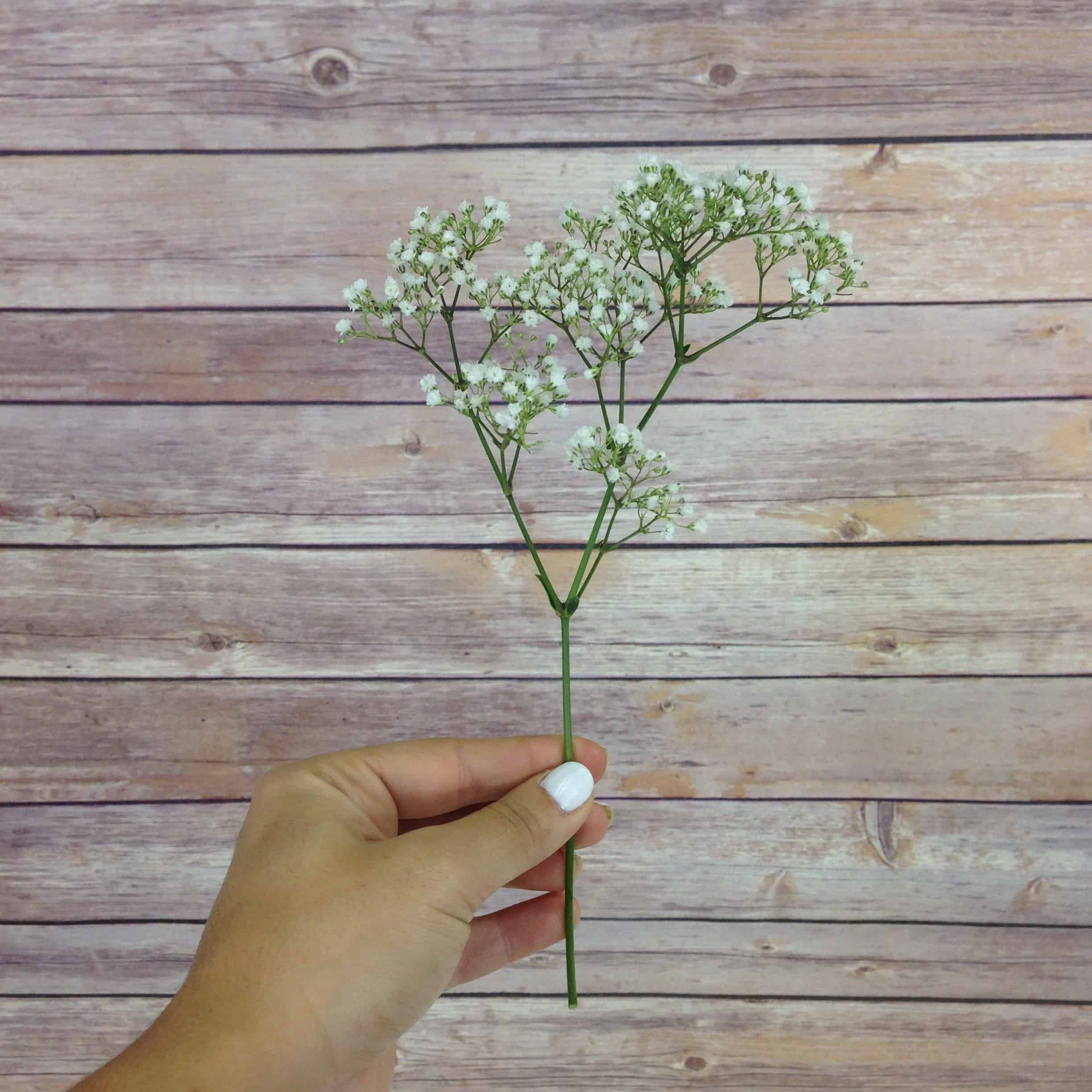 How Much Babys Breath Do I Need