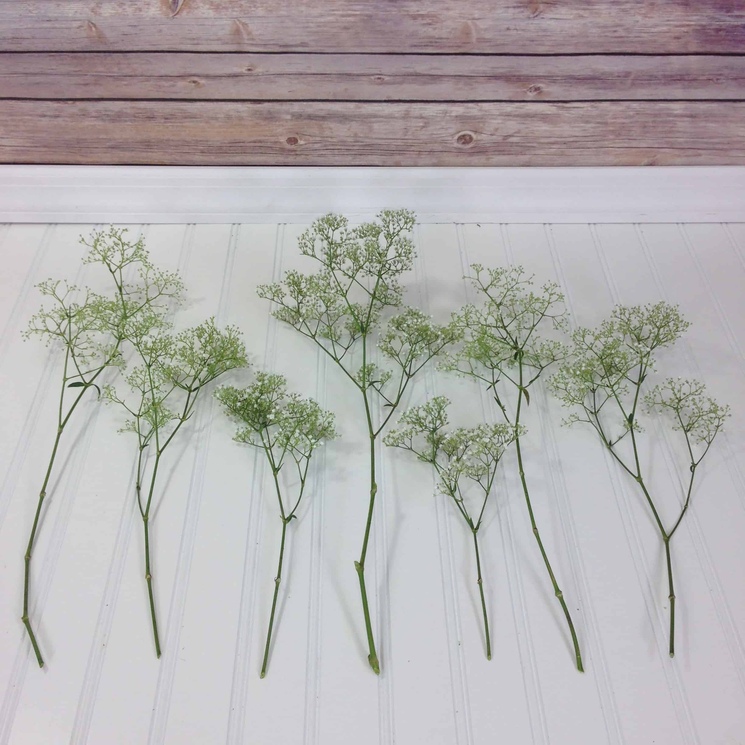 baby's breath pieces