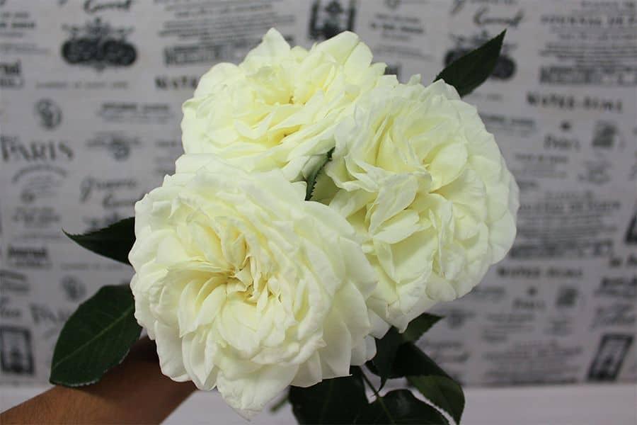 garden rose bouquet three