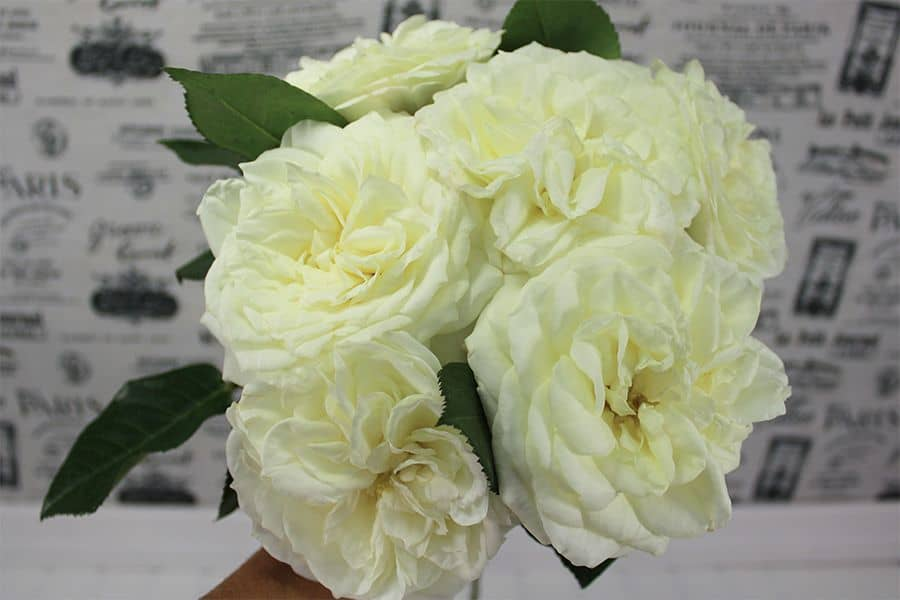 How to Make a Garden Rose Bouquet
