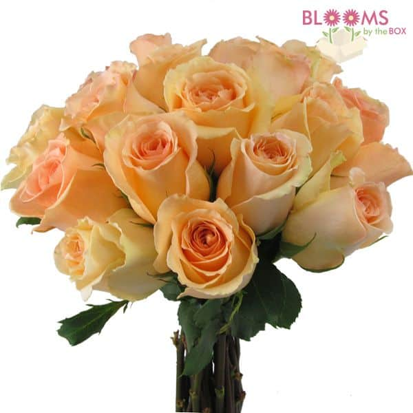 Peach Versilla Rose - 25 Stems