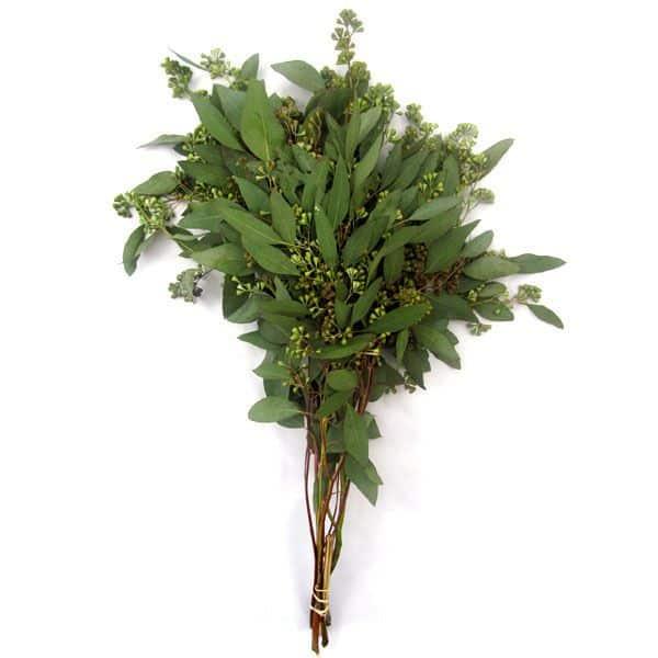 Seeded-Eucalyptus