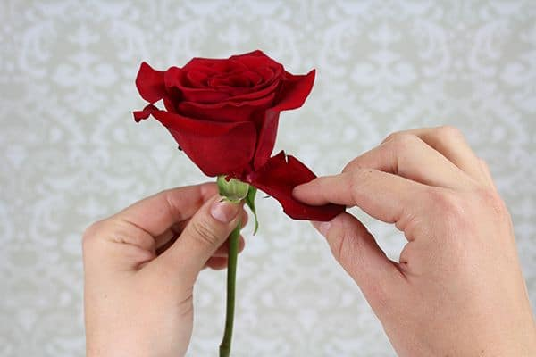 How to Make a Boutonniere 3