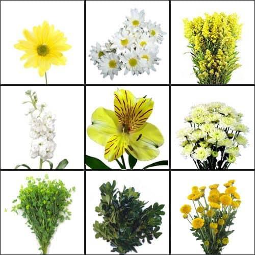 July is Wildflower Month (Enchanted Meadow) Wildflower Pack