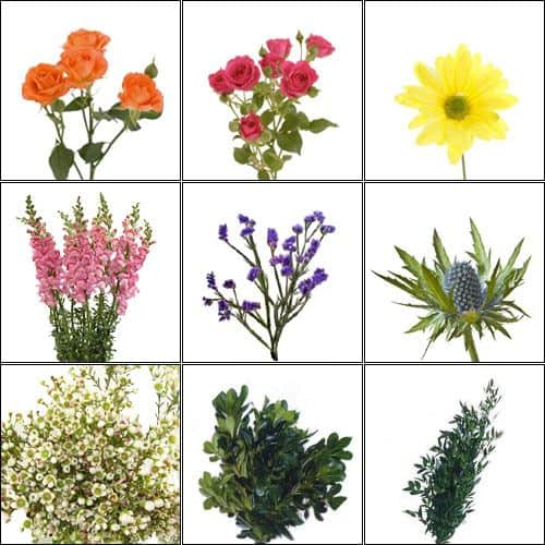 July is Wildflower Month (Rainbow Mix and Match)-Wildflower-Pack