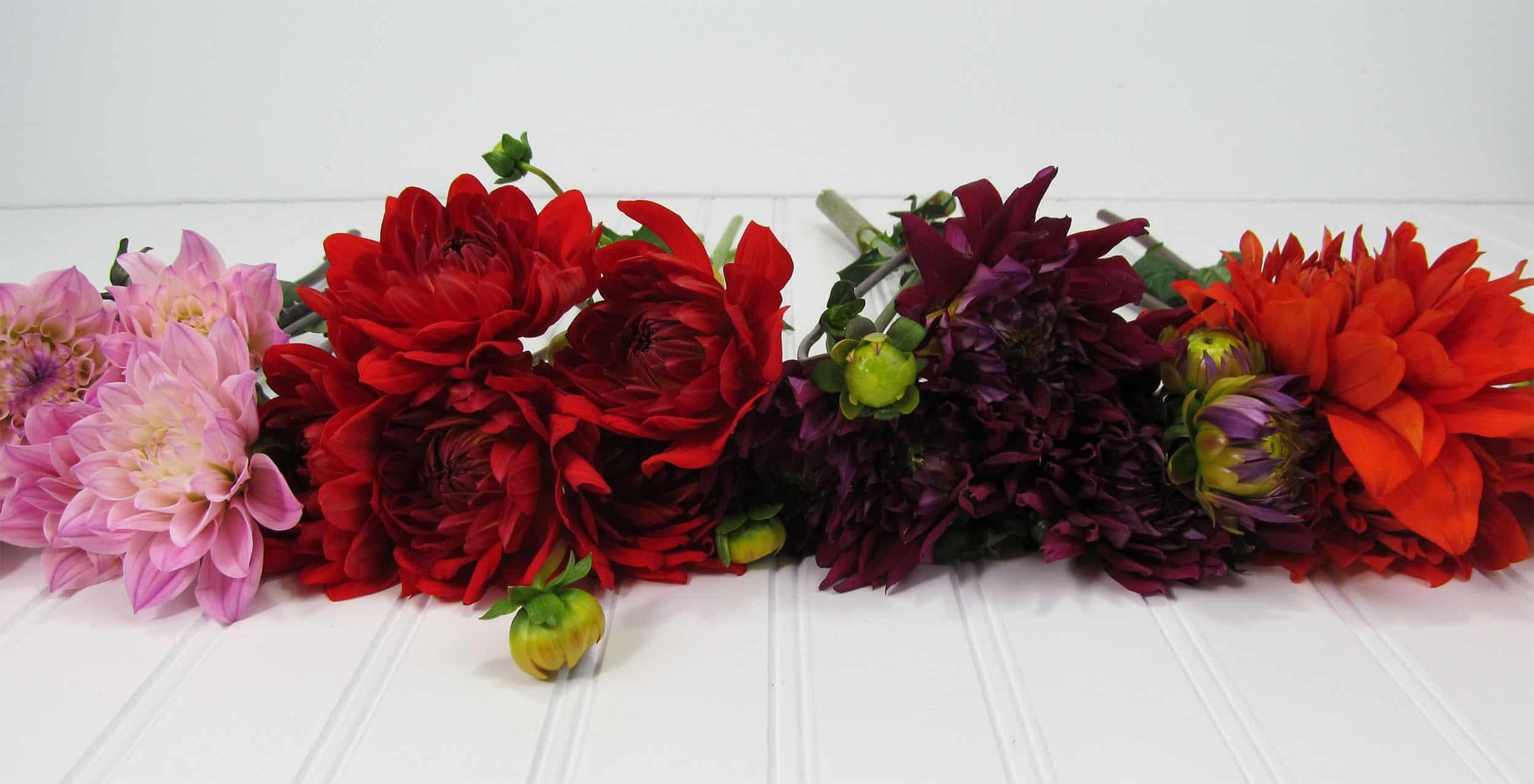 Dahlia SALE - Wholesale Wedding Flowers Blog
