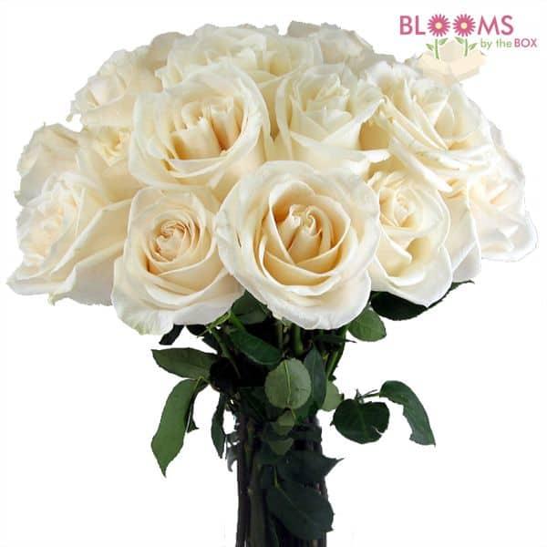 Vendela Rose - 25 stems