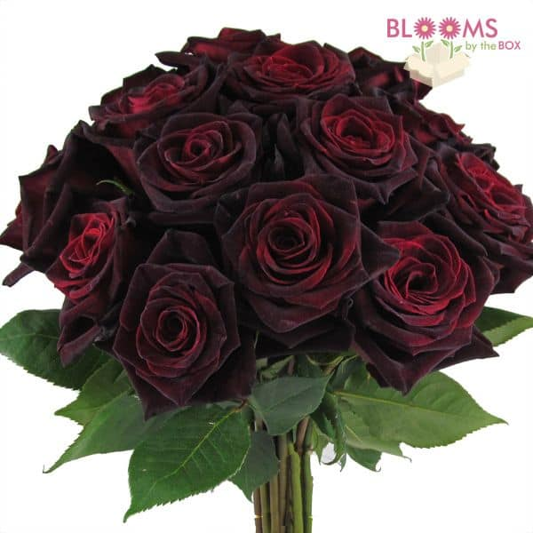 Rose Black Baccara - 25 Stems