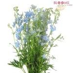 Light-Blue-Delphinium