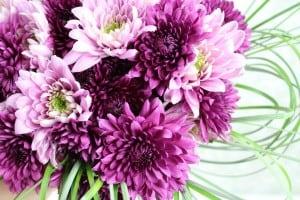 purplemum