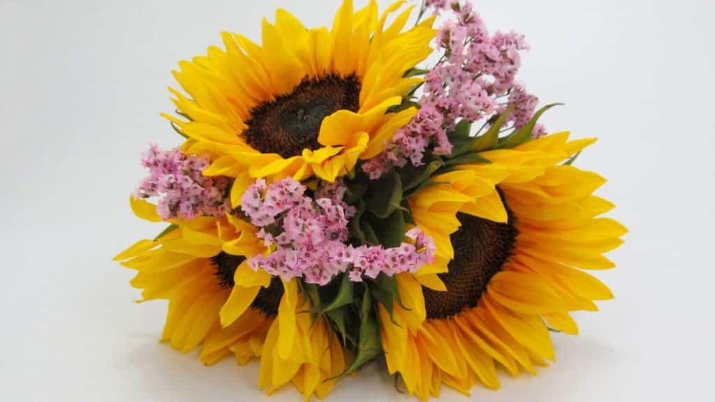 sunflower-series-bridesmaid-sunflower-bouquet