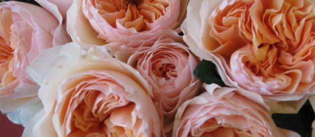 Peach and Mint Bouquet Recipe