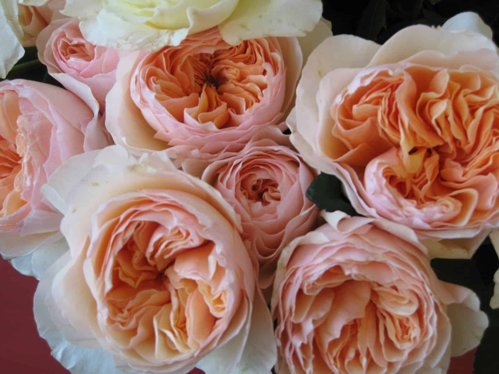Peach and Mint Bouquet Recipe