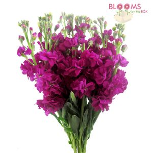 Blooms By The Box's Wholesale Stock