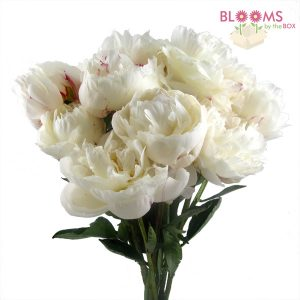 White Peonies by the bunhc