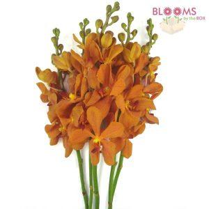 Dendrobium Orchid Orange