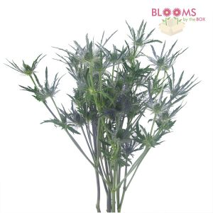 Blooms By The Box's Wholesale Thistle