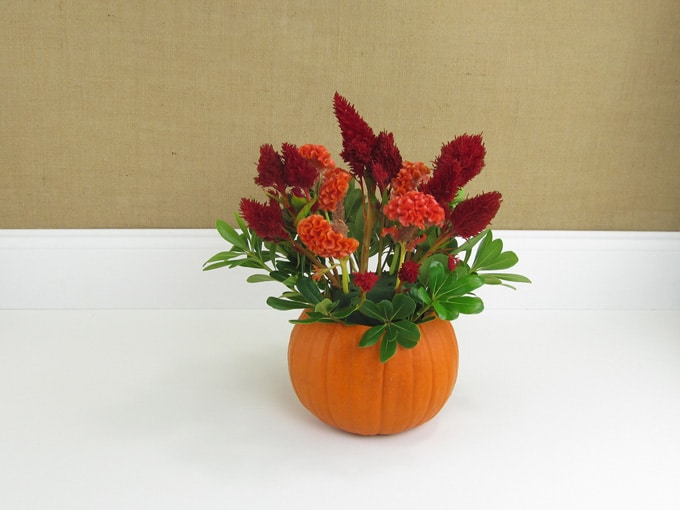diy-pumpkin-arrangement-05