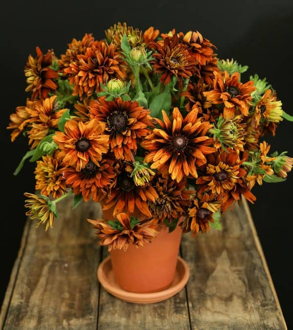Fall Garden Style Centerpiece Tutorial in Terra Cotta