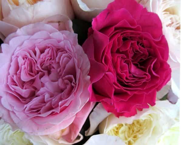 Wedding Flower Favorite David Austin Garden Roses Blooms By The Box