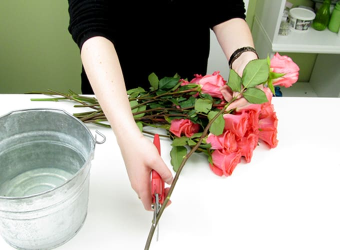 How to Care for Roses by Blooms by the Box