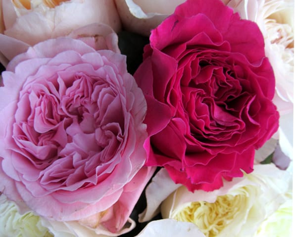 Wedding Flower Favorite: David Austin Garden Roses
