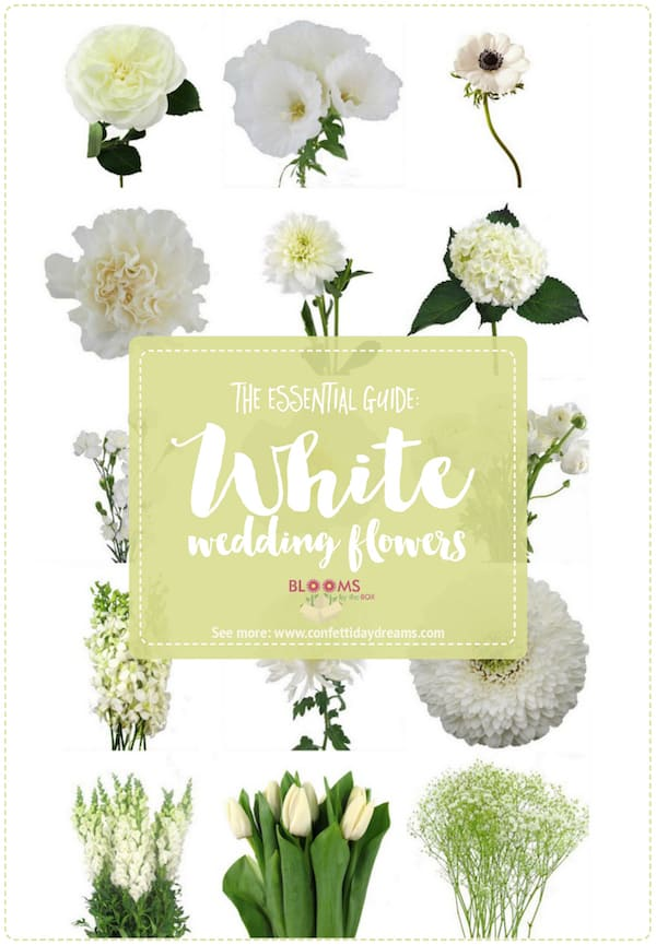 White Wedding Flowers Names And Pictures : White wedding flowers featured on confetti day dreams