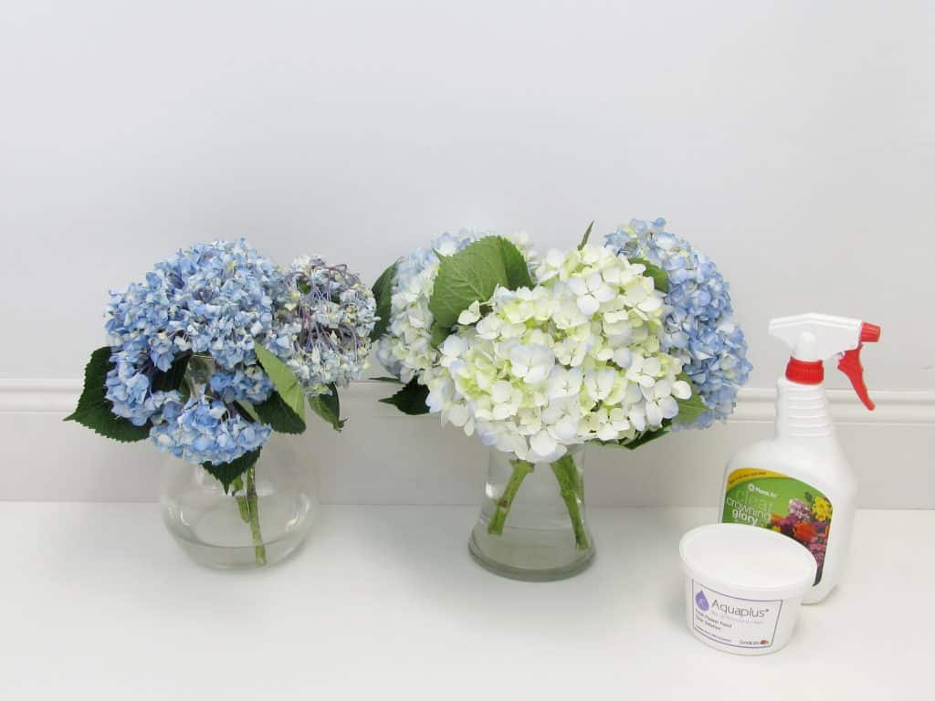 Flower Care Comparison by Blooms by the Box