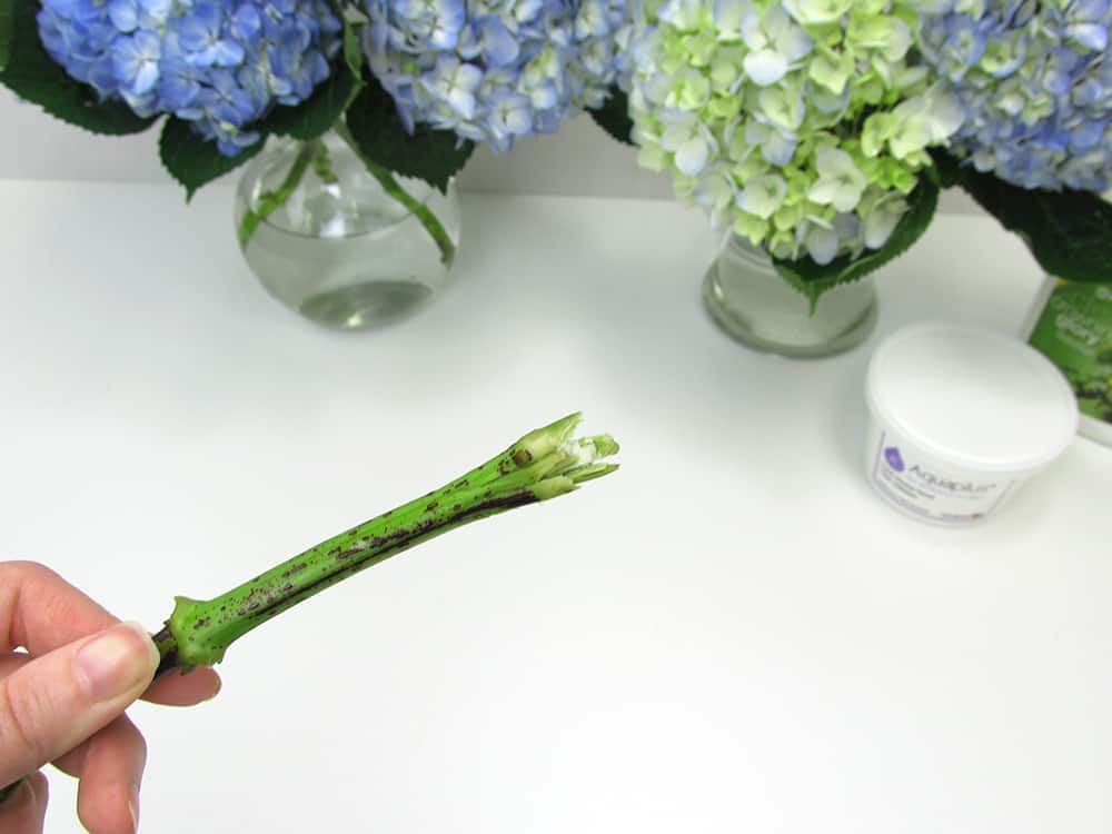 7 Essential Diy Flower Tips From The Pros Budget Friendly Beauty