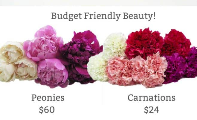 Faux Peonies Using Fresh Carnations
