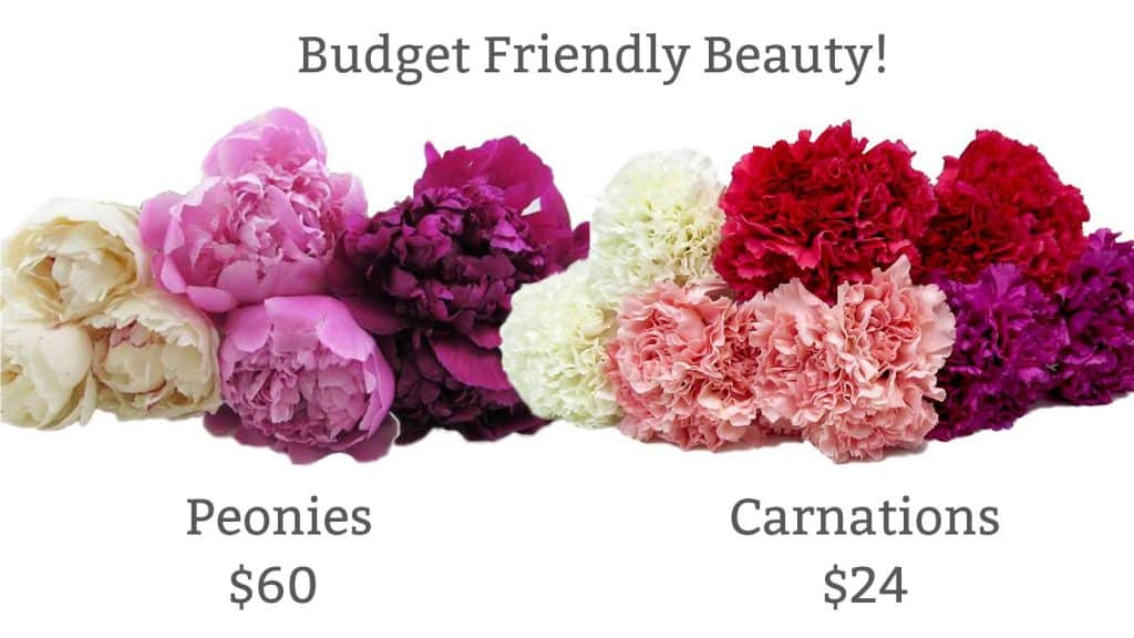 Maximize your DIY budget by turning carnations into faux-peonies!