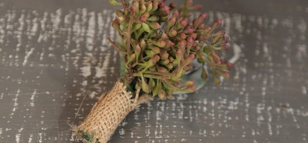 Piecing Together Your DIY Succulent Boutonnieres