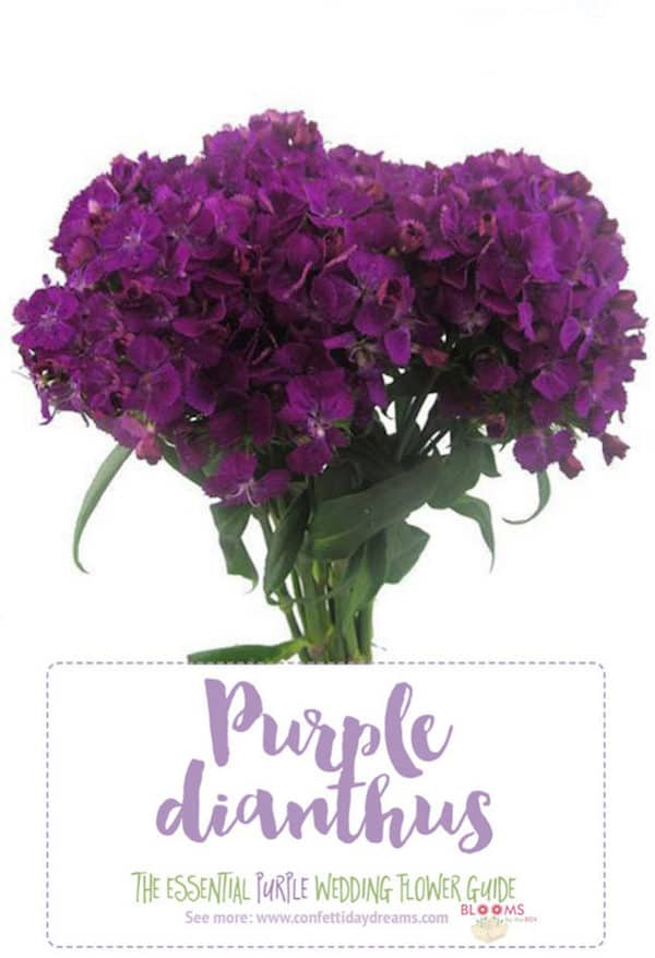 Purple Wedding Flowers, Confetti Day Dreams, Purple Dianthus