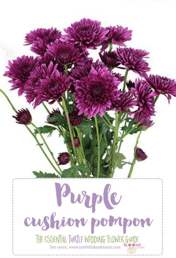 Purple Wedding Flowers, Confetti Day Dreams, Cushion Pompon