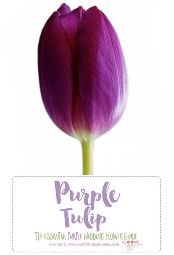 Purple Wedding Flowers, Confetti Day Dreams, Purple Tulip, Tulip